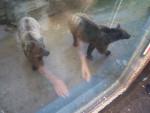 grods nounours - Männlich Bär (3 Jahre)