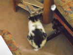 Backside of Bunny - Männlich Hase (Andere)