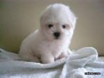 flo0r - Hund (3 Monate)