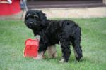Nico - Hund